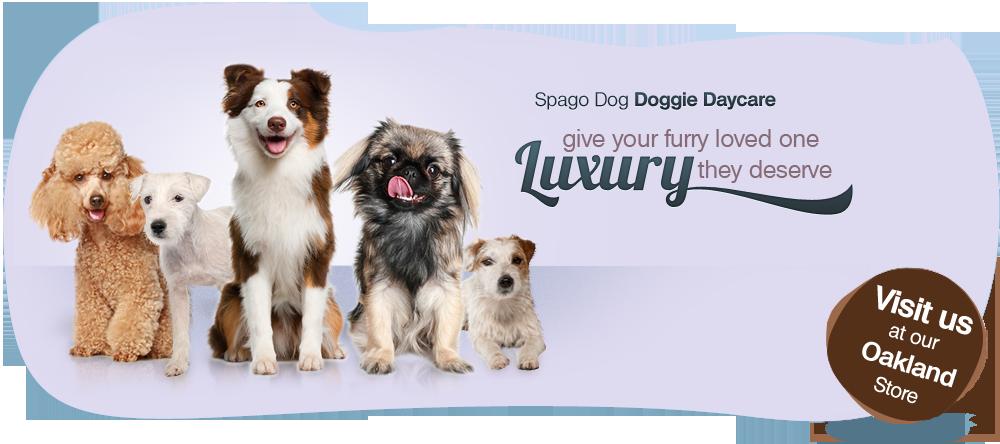 Spagodog A La Carte Package